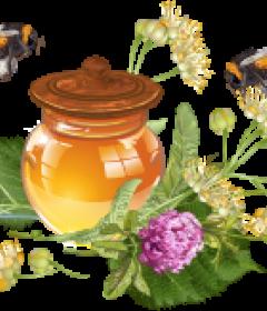 Продукты пчелиной жизнедеятельности